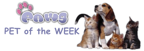 Paws-Pet-of-the-Week-page
