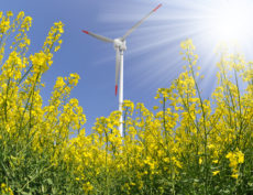 rapeseed field with wind turbine against the blue sky