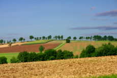 A landscape with a different Fields and diffrent trees