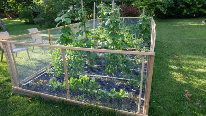 Fenced organic vegetables garden with irrigation system in a backyard.