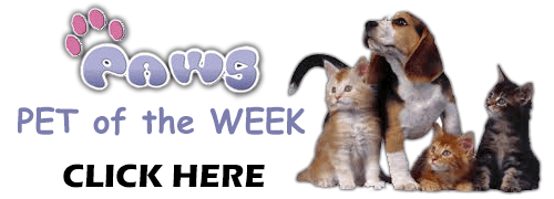 PAWS Pet of the Week