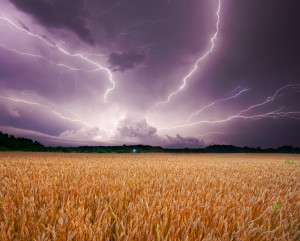 Storm Over Wheat