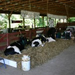 Animal barn with people