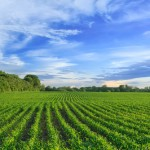 farm bill policy