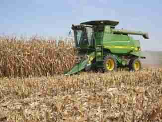 Farmer In A John Deere Combine Harvesting Corn