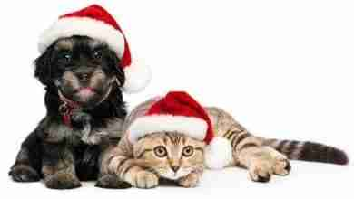 Photo of Santa PAWS – free photos of your pet with Santa!