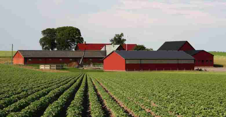 Farm and Bldgs