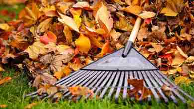 Photo of Charles City's final leaf pickup of year set to begin November 6th