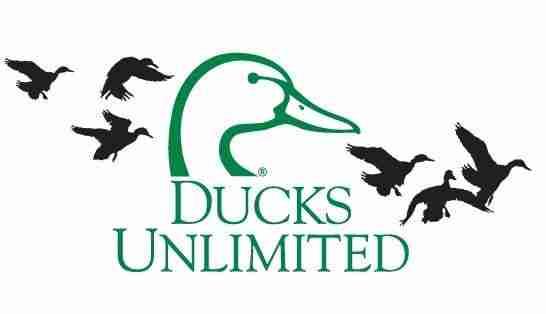 DucksUnlimited