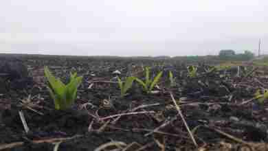 "Photo of Iowa corn farmers make ""tremendous progress"" planting, up to 2M acres a day"