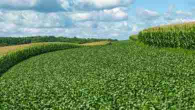 Photo of Corn, soybeans lagging behind yearly average