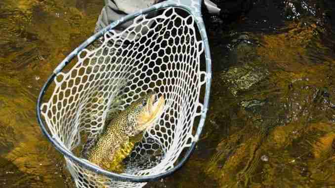 Dnr significant reductions in store if state fishing for Colorado fishing license fees