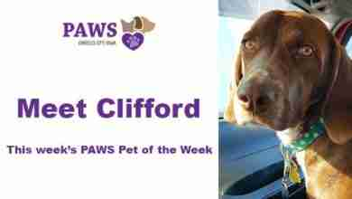 Photo of PAWS Pet of the Week – Clifford