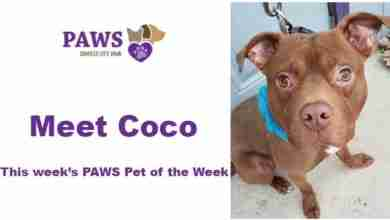 Photo of PAWS Pet of the Week – Coco