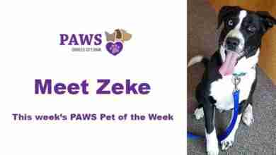 Photo of Paws Pet of the Week – Zeke