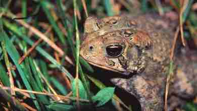 Photo of Iowa's annual frog and toad survey underway