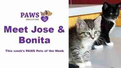 Photo of PAWS Pets of the Week – Jose & Bonita