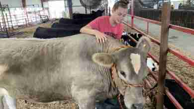 Photo of Floyd County Fair exhibitors, pet owners battling excessive heat