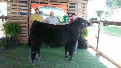 Photo of Governor's Steer Show more than just cattle for Dight family