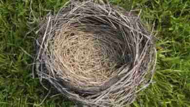 Photo of How to cope with being an empty nest parent