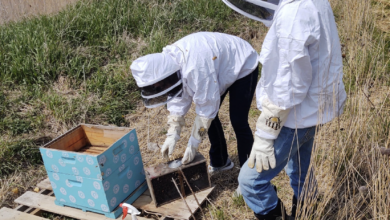 Photo of Charles City FFA harvesting honey to donate to local food bank